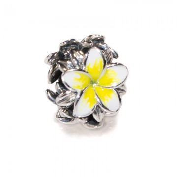 Frangipani Yellow & White...